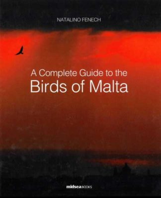 A Complete Guide to the Birds of Malta