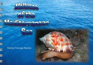 Molluscs of the Mediterranean Sea