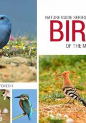 Birds of the Maltese Islands