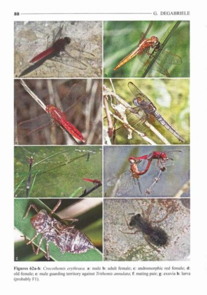 An Overview of the Dragonflies and Damselflies of the Maltese Islands