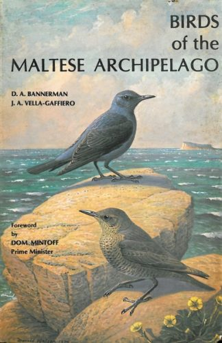 Birds of the Maltese Archipelago