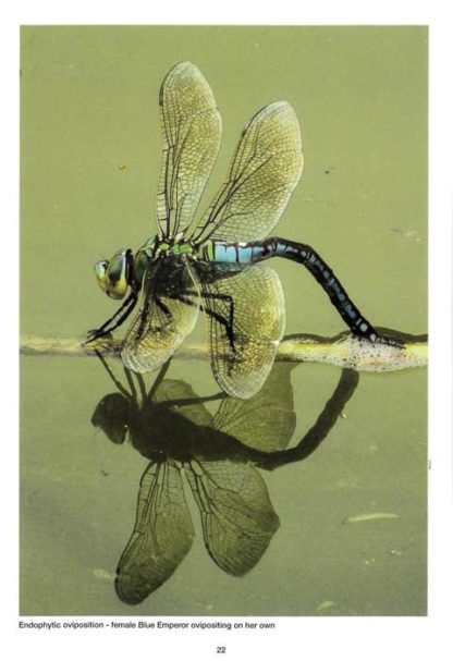 Dragonflies-and-Damselflies-of-the-Maltese-Islands-BDL Books