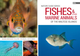Fishes and other marine animals