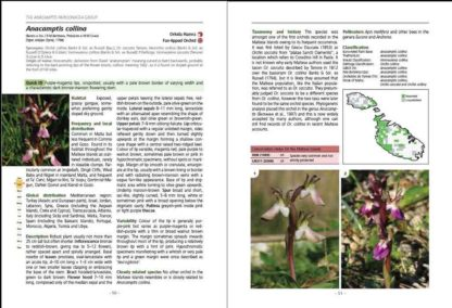 Orchids of the Maltese Islands BDL Books